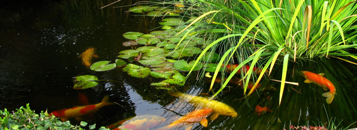 pond_blog_slider2