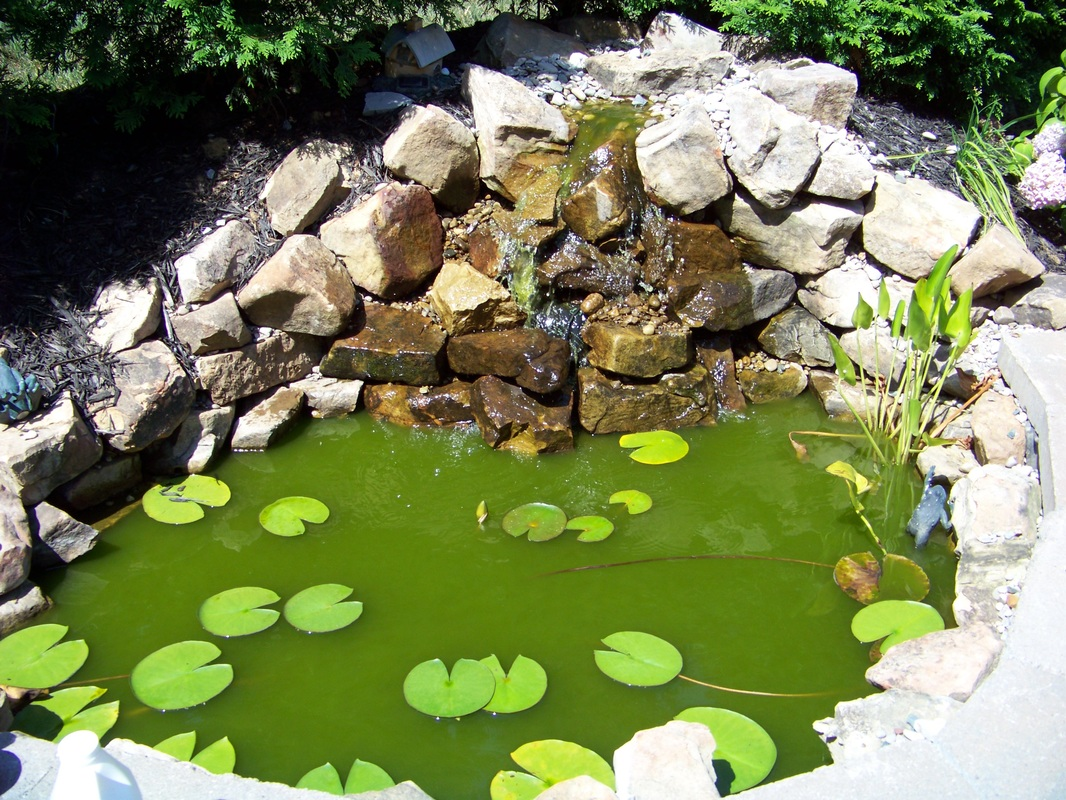 How ph levels affect pond water color backyard blessings for Green water in pond