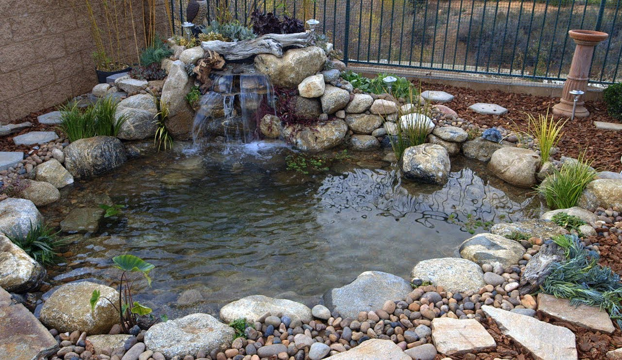 Regular maintenance is important for a healthy pond for The backyard pond