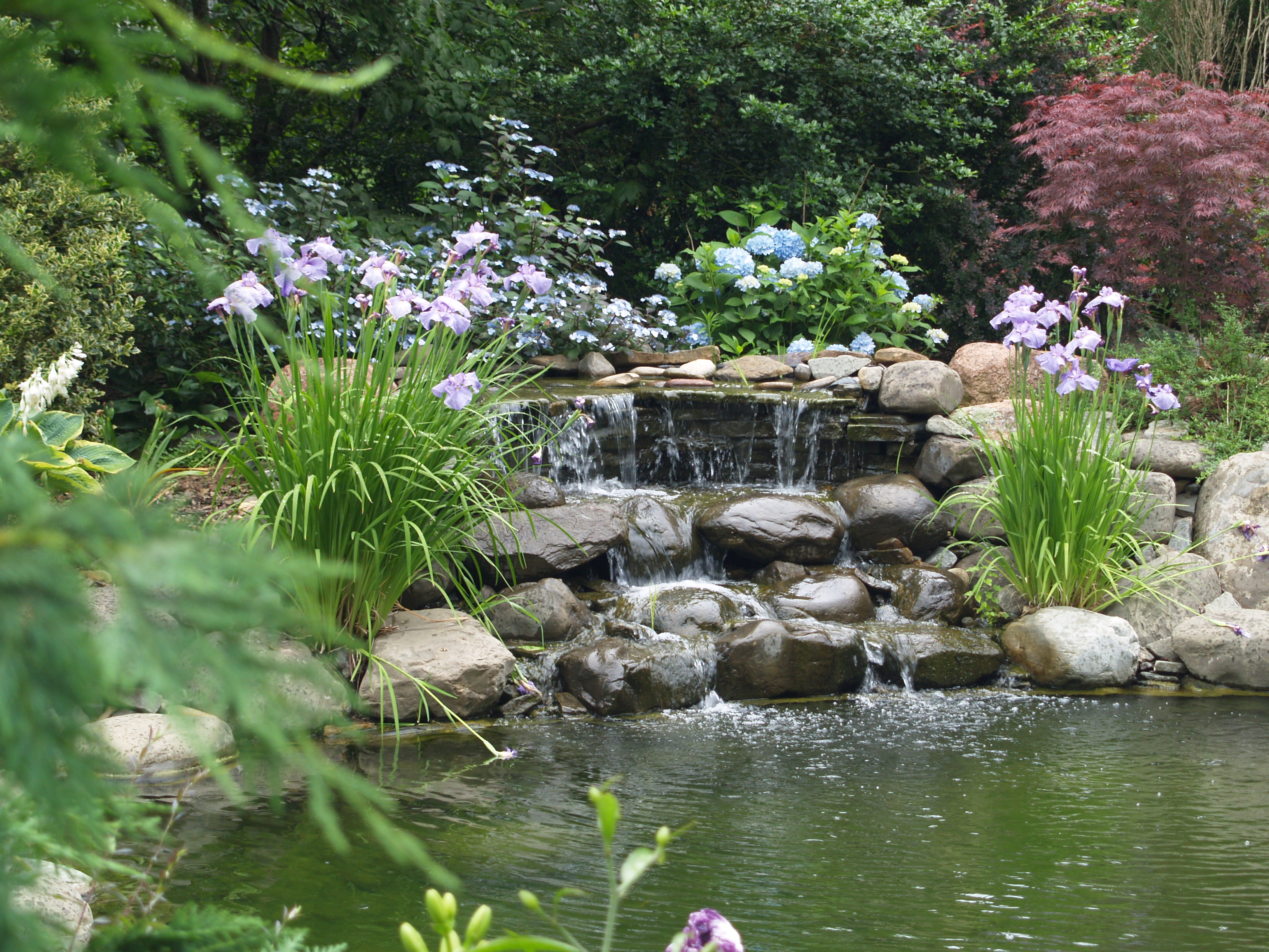 Our solutions to pond pump issues backyard blessings - Piante decorative da giardino ...